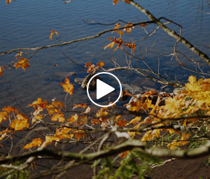 Colwell Lake Video